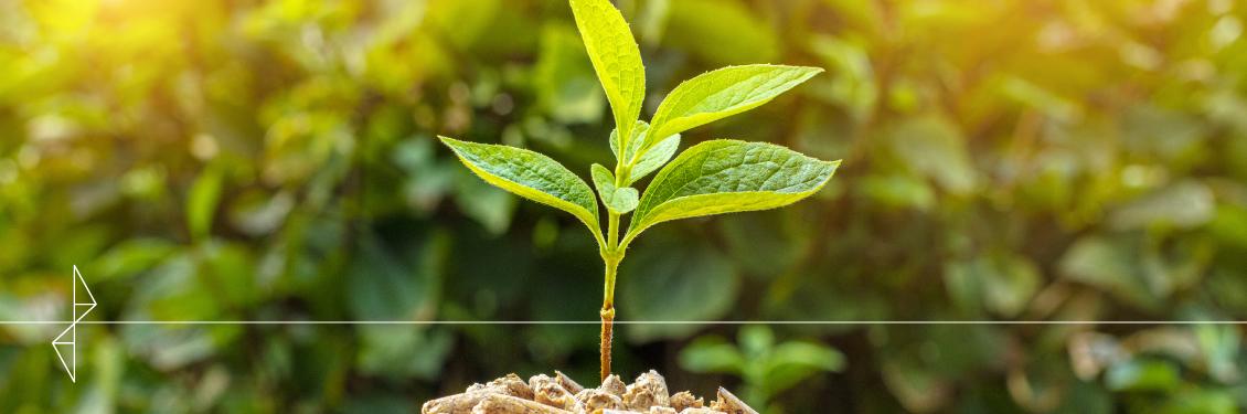 Com foco em novos leilões, geração de energia com biomassa avança
